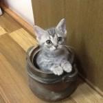 共働きや一人暮らしでも猫を飼ってみたいあなたへ