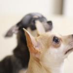 【泣ける犬の話】ある犬のおはなし(動画) 殺処分ゼロを願って