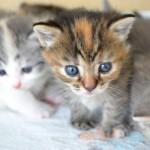 猫の多頭飼いは難しいの?新しい猫ちゃんを上手く迎える秘訣
