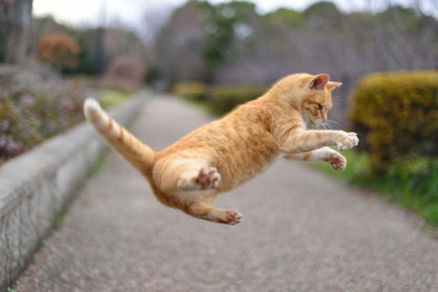 ジャンプ猫
