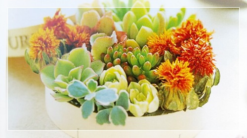お部屋ガーデンの雑貨にぴったりなカラフルな可愛い多肉植物の寄せ植え