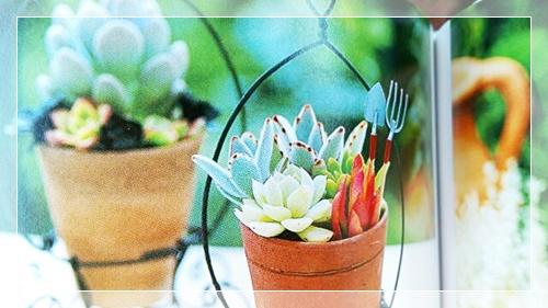 お部屋ガーデニングに映える多肉植物のワイヤー釣り鉢