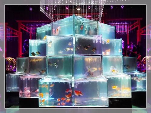 金魚アクアリウムイベントの様子