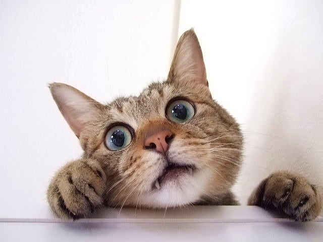しつけが嫌で引っかこうと身構える猫