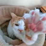 猫ちゃんのしつけ!噛んだり引っかいたりする癖をやめさせる方法