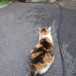 今何考えてるの?猫ちゃんのしっぽを見ればまるっとお見通し!