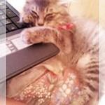 可愛い子猫にくびったけ!捨て猫の育て方実践記(=^・^=)