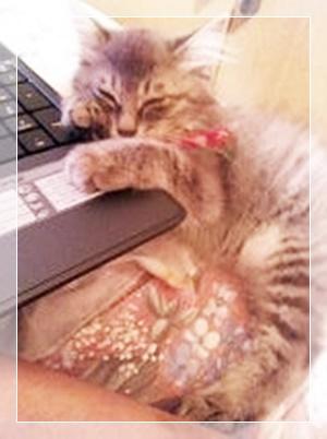 パソコンで寝てる猫