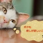動物カフェで癒されたい!今もっともオススメの街は東京吉祥寺!