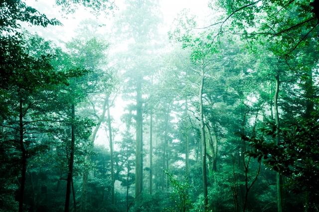 原始人が住んでいそうな森の中