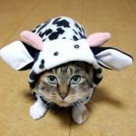 SLE(全身性エリテマトーデス)でも猫を飼いたい!3つの注意点とは?