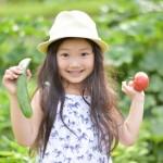 きゅうりが肉食女子を救う!ダイエットできる理由と簡単レシピ