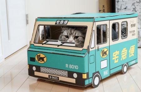 宅配便の猫