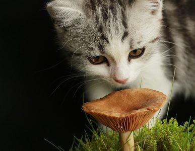 きのこと猫