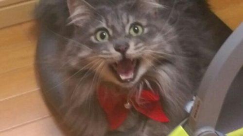 猫のお悩みやかわいい動画まとめサイト