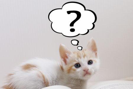 はてなを浮かべて考える子猫